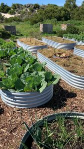 Camp Joy vegetable garden and composting site