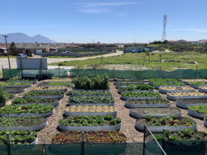 The kitchen garden at Camp Joy